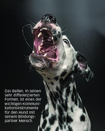 bellender Hund kommuniziert
