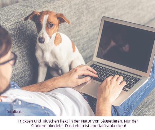 Hund beobachtet Mensch am PC