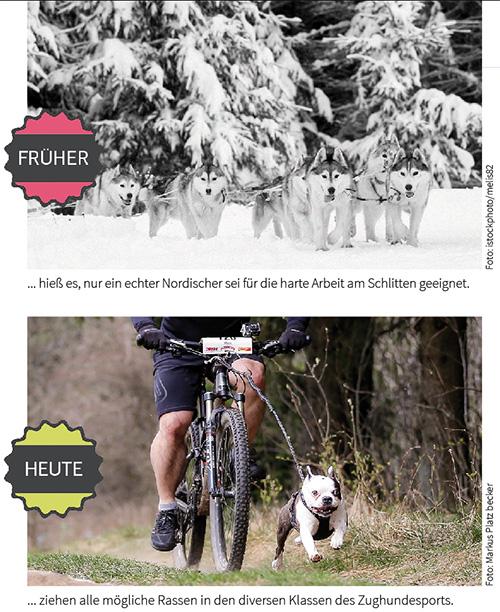 Zughundesport im Wandel
