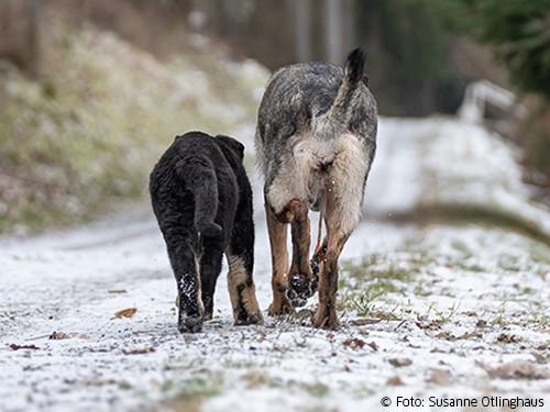 hund-und-welpe-laufen-weg
