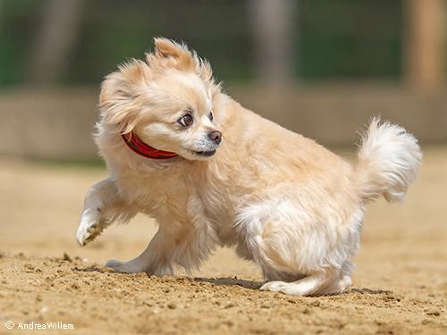 kleiner-Hund-hat-hat-Angst