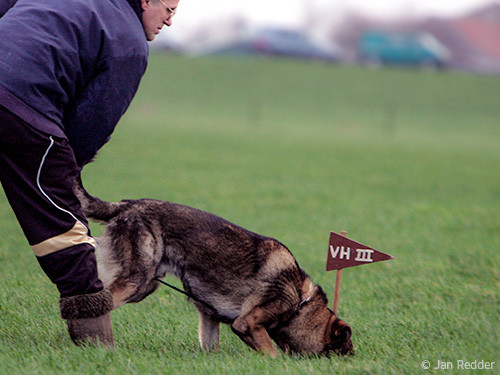 Fahrtenansatz-mit-Schaferhund
