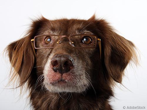 schlauer-Hund