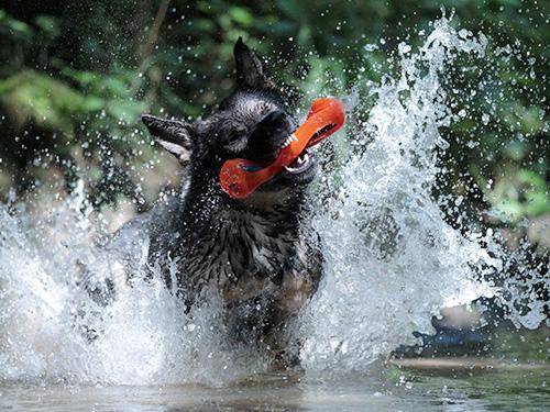 Blogartikel: Champions testen Wasserspielzeug