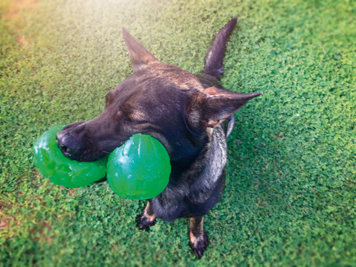 Hund-mit-zweimal-Ball