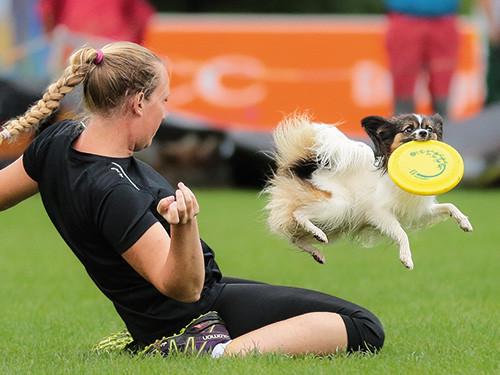 Hund-faengt-frisbee