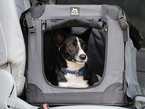 Hund-in-der-Box-im-Auto