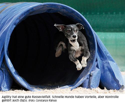Hund im Agilitytunnel