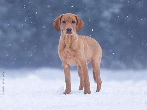 Immunsystem-st-rken-beim-Hund
