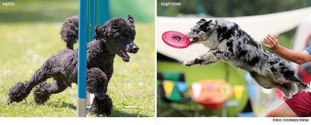Agility und Dogfrisbee