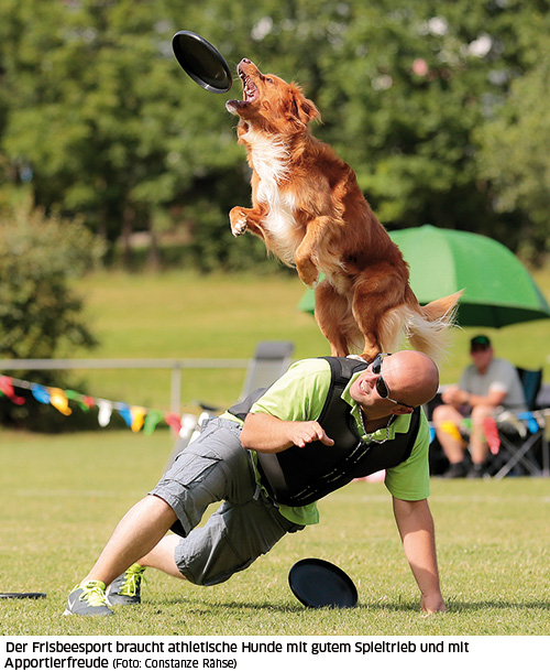 Teamwork Hundefrisbee